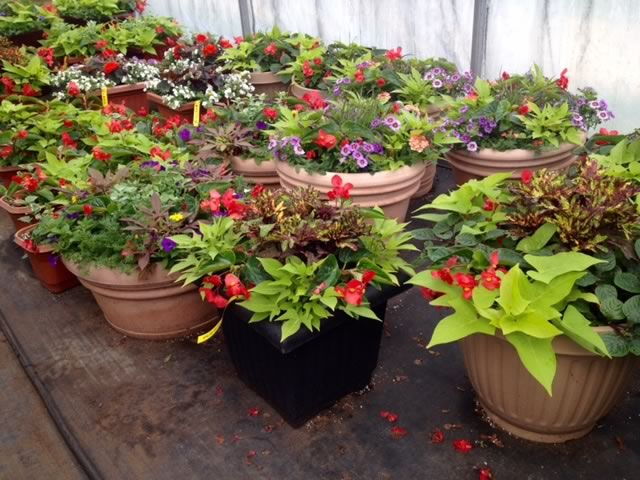 Custom Container Planting Service