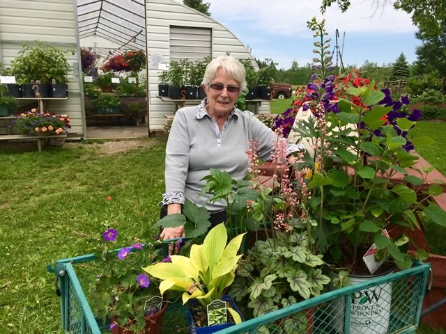 Sharon selected a variety of perennials and a Hydrangea to fill in a few gaps in her gardens