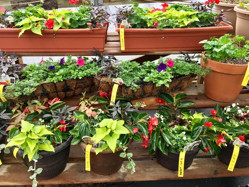 Choose your favourite colours and plants and we will design, plant and grow your containers for you