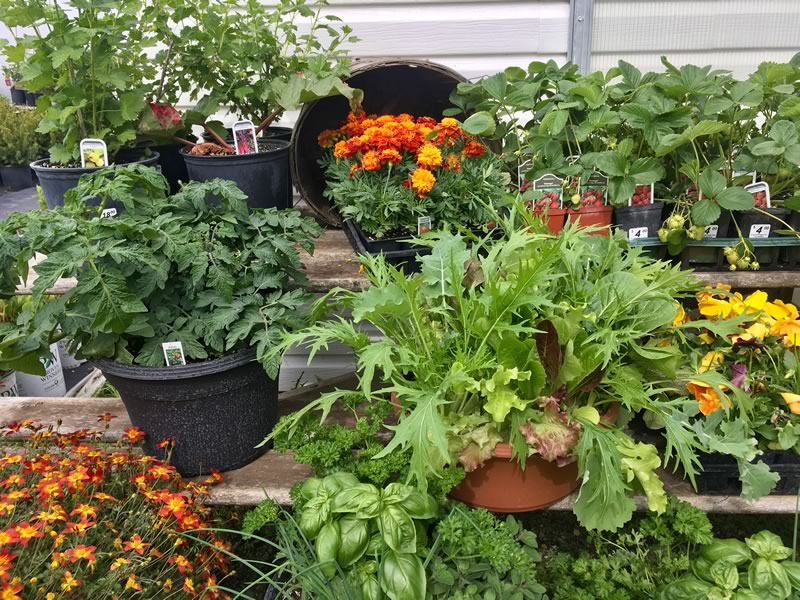 Flowers, veggies, herbs! We have a wide variety of locally grown plants.
