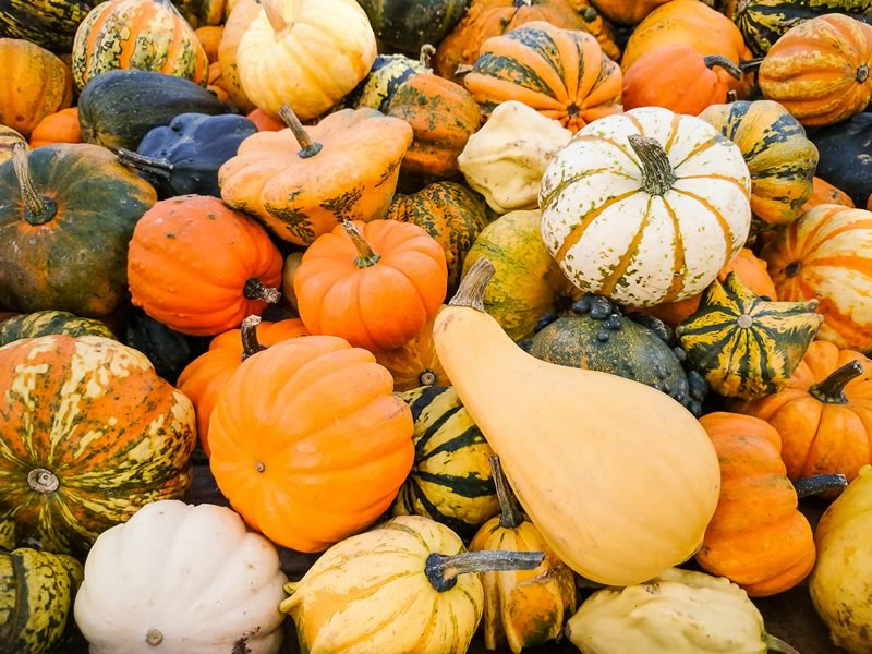 We grow a cool selection of Pumpkins and Gourds