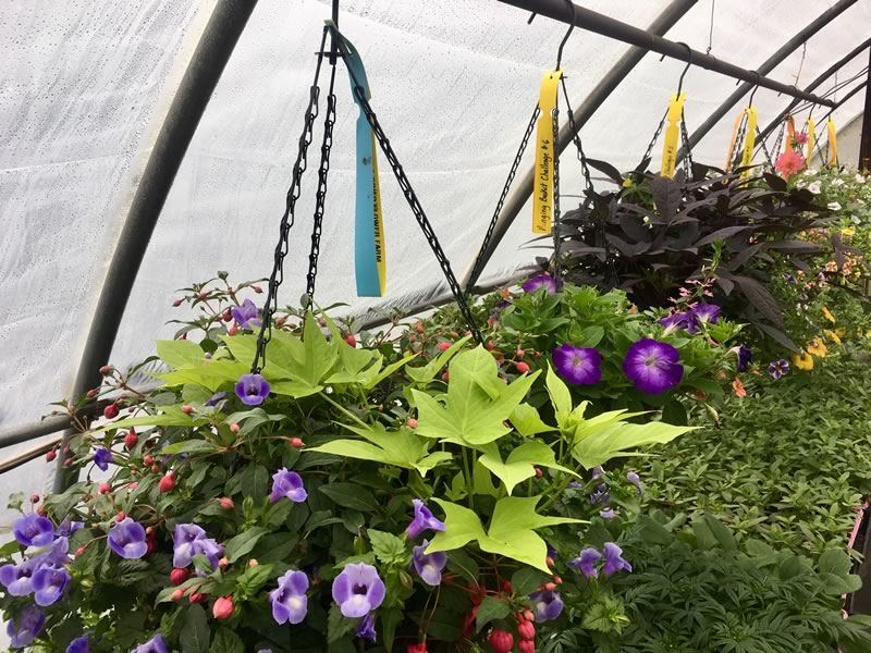 "In early March, our employees designed and planted a 14"" hanging basket each, using no more than 6 plants."