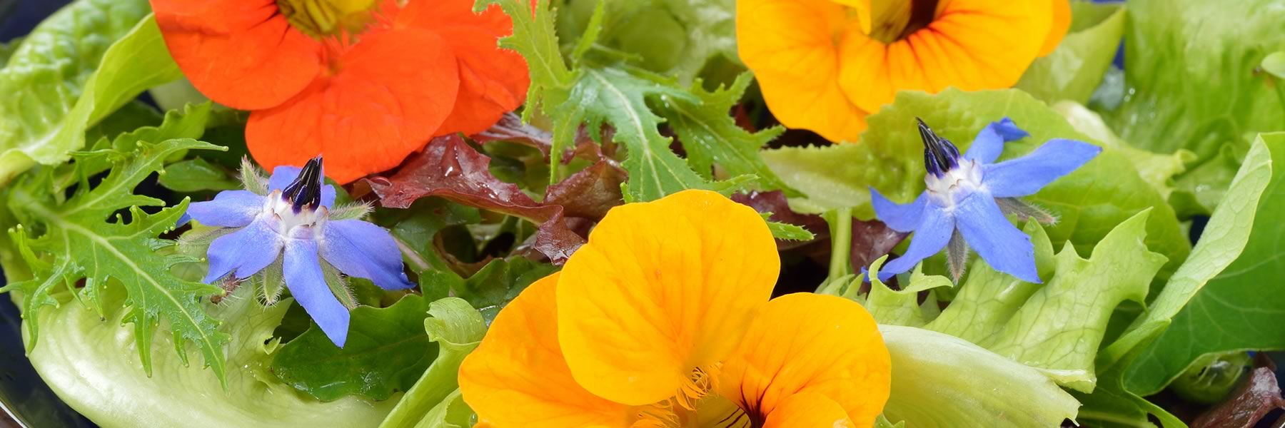 Avoid using any chemicals when growing your edible flower plants.